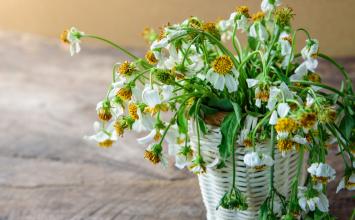 Bitki Zararlılarından Korunmanın Doğal Yolları