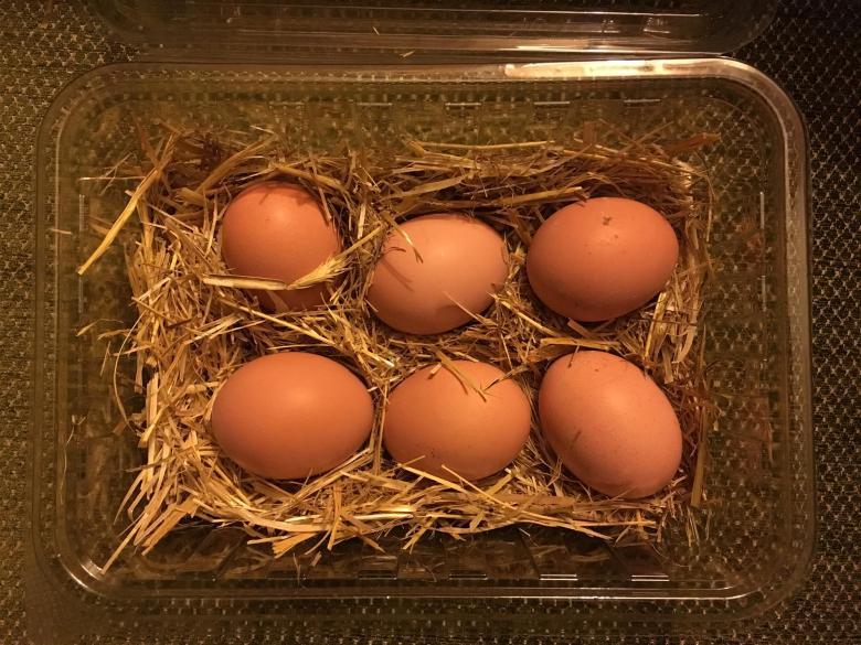 Köy Tavuğu Yumurtası 10lu Paket