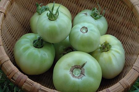 Natural Yeşil Domates Turşusu 1200 g